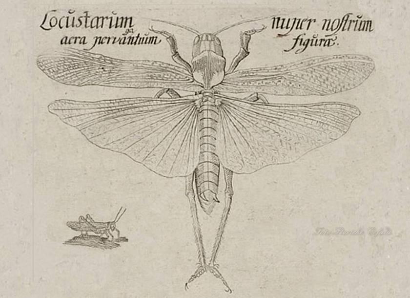 Cefalù il grande miracolo del 1657